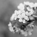 Blühte im Frühling