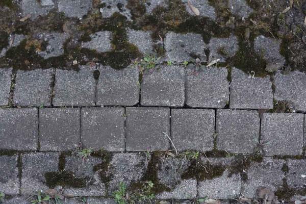 Stein-Textur - Flaster mit Pflanzen