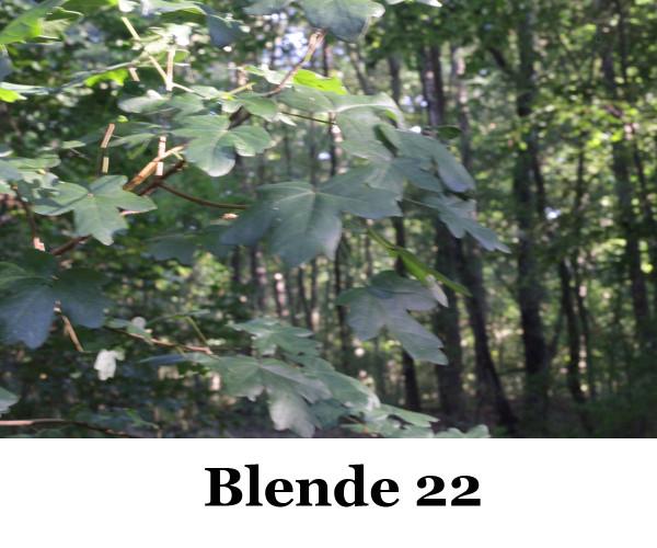 50mm-Foto-Blende-22