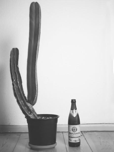 Kaktusfotos-2019